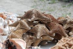 высушенные starfish Стоковое Изображение RF
