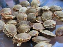 высушенный абрикос делает ямки семена Стоковые Изображения