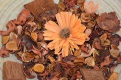 Высушенный апельсин цветет предпосылка Стоковое Изображение RF