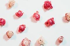 Высушенный аранжировать цветка поднял предпосылка ассортимента стоковые фотографии rf
