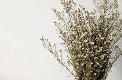 Высушенный букет белых цветков Стоковые Фото