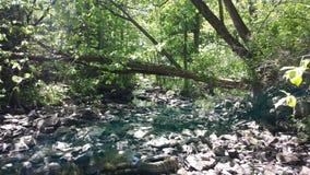 Высушенный вверх по потоку Стоковая Фотография
