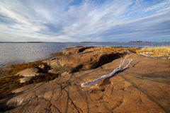 высушенный ветвью seacoast ландшафта вверх Стоковое Фото