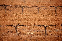 высушенный виноградник outumn виноградины поля Стоковые Изображения