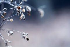 Высушенный - вне засадите лес кервеля в съемках цветов и макроса светов осени Предпосылка луга захода солнца Стоковое Изображение