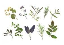 высушенный выбор листьев травы Стоковые Фото
