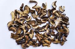высушенный гриб Стоковые Фото
