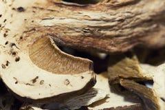 Высушенный гриб porcini Стоковое фото RF
