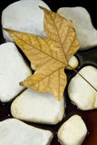 высушенный камень листьев Стоковые Изображения RF