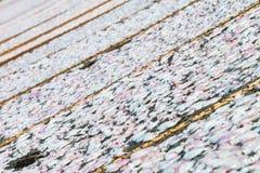 Высушенный кальмар на рыбацком поселке стоковое фото rf