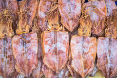 Высушенный кальмар стоковое фото rf