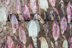 Высушенный кальмар Стоковые Фотографии RF