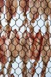 Высушенный кальмар Стоковое Фото