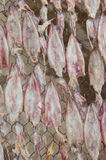 Высушенный кальмар Стоковые Фото