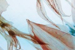 Высушенный кальмар Стоковая Фотография