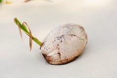 Высушенный кокос, на пляже Стоковое фото RF
