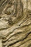 высушенный конспектом ствол дерева изверга стороны вне Стоковое Изображение RF