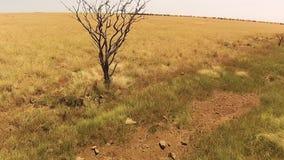 Высушенный коричневый цвет - вне дерево сток-видео