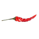 Высушенный красный цвет, перец Чили горячий изолированный на белой предпосылке Стоковое Фото