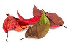 Высушенный крупный план листьев Стоковое Фото