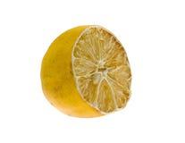 высушенный лимон Стоковые Изображения