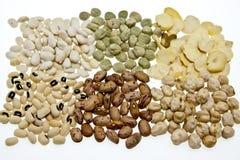 высушенный овощ Стоковое фото RF