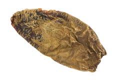Высушенный перец chile chipotle на белой предпосылке Стоковая Фотография