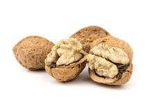 Высушенный плодоовощ грецких орехов Стоковые Фотографии RF