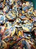 Высушенный посоленный моллюск Стоковые Фото