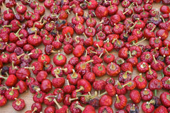 высушенный предпосылкой красный цвет паприки Стоковая Фотография RF