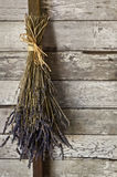 Высушенный пук лаванды цветет висеть вверх на старой текстурированной деревянной стене Стоковое Фото