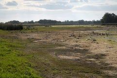 Высушенный рекой жары Стоковое фото RF