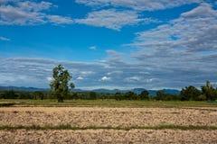высушенный рис filde Стоковые Фото