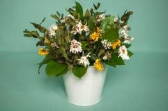 Высушенный стоцвет в ведре Стоковые Фото