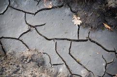 Высушенный след грязи Стоковые Фотографии RF