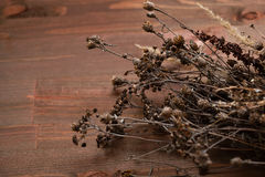 Высушенный цветок на деревянной предпосылке поле глубины отмелое Космос для текста Естественное освещение Стоковые Фото