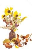 высушенный цветок Стоковая Фотография