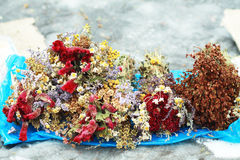 высушенный цветок Стоковое Изображение