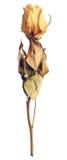 высушенный цветок Стоковые Фотографии RF