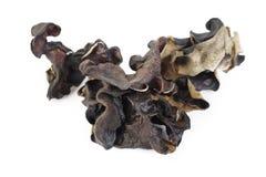 Высушенный черный грибок на белизне Стоковое фото RF