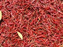 высушенный chili bangkok перчит Таиланд Стоковые Изображения