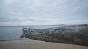 Высушенный driftwood в конце вверх акции видеоматериалы