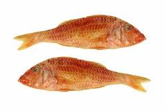 2 высушенный goatfish изолировано Стоковое Фото