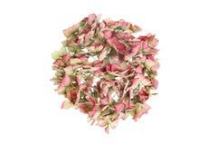 высушенный hydrangea цветка Стоковое Изображение RF