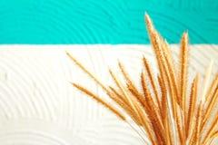 Высушенный Pennisetum Стоковые Изображения RF