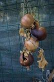 Высушенный pomegranate Стоковые Изображения
