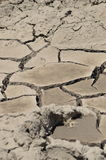 высушенный riverbed вверх Стоковые Изображения