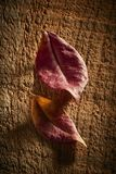 2 высушенных листь на деревенской древесине Стоковые Изображения RF