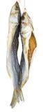 2 высушенных посоленных рыбы серых кефали Стоковые Фото