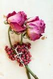 2 высушенных розы и розария Стоковые Изображения RF